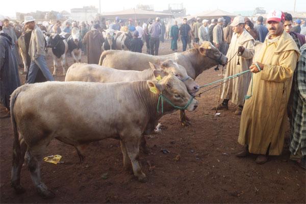 Aliment de bétail : Cri d'alarme des éleveurs contre les hausses excessives
