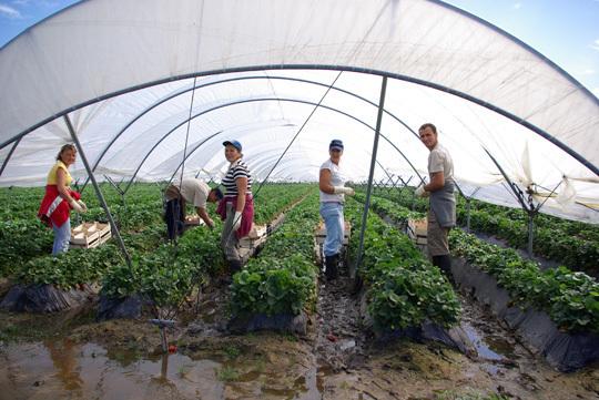 saisonniers agricoles marocains et tunisiens