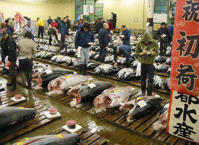 WWF : Le Maroc impliqué dans le commerce international illicite du thon rouge