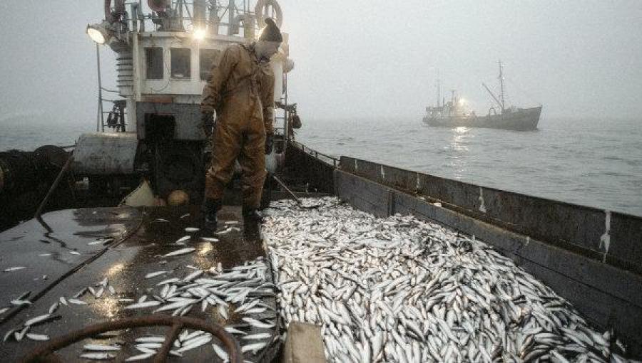 Les tournois de la pêche russe 3.0 quantité