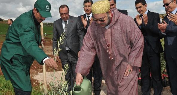 Maroc/Agriculture : Le pommier et l'olivier gagnent du terrain à Séfrou