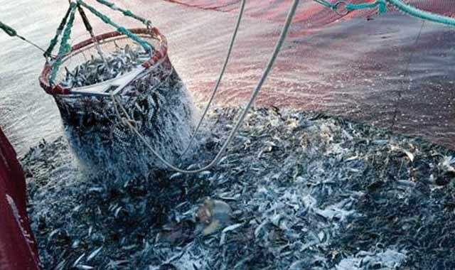 Maroc/pêche : Les débarquements en hausse de 6% à fin 2013
