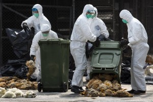 Aviculture-Hong-Kong-virus