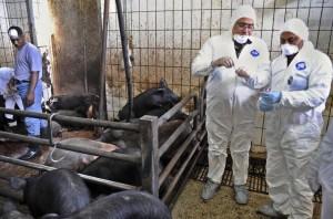 MIDEAST EGYPT SWINE FLU