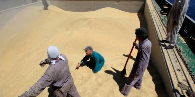 L'Egypte boycotte le blé français, jugé humide et moins protéiné