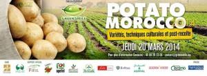 Potato morocco 2014