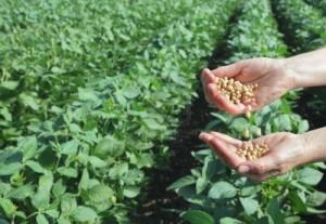 brésil-soja-production-céréales