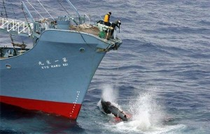 japon-baleine