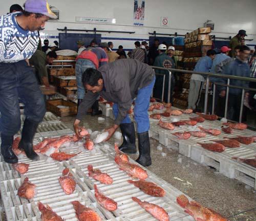 Maroc-Pêche côtière: Le volume des captures en régression de 18%