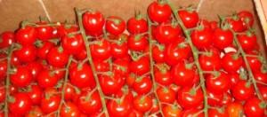 Tomates-cerises-marocaines