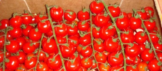 Un lot de tomates-cerises marocaines objet d'une alerte sanitaire en Europe