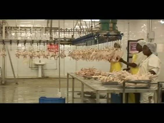 Afrique/Aviculture: Le Liberia a sa première écloserie