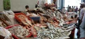 Le Maroc 1er producteur arabe et africain de poissons