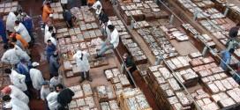 Maroc/pêche : Bonne prise avant l'arrivée des pêcheurs européens