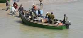 Maroc: Lancement de projets de valorisation des petits pélagiques à Dakhla