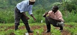 Le forum francophone «Africa Agri Forum 2014″, les 13 et 14 octobre à Abidjan