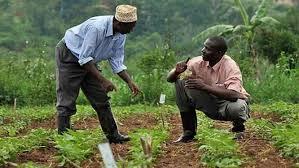afrique-agriculture2