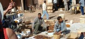 La production de dattes à Ouarzazate en baisse de 15 pc
