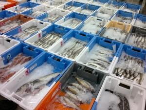 Distribution à Dakhla de contenants normalisés isothermes aux pêcheurs