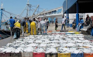 Maroc-Debarquement-poissons