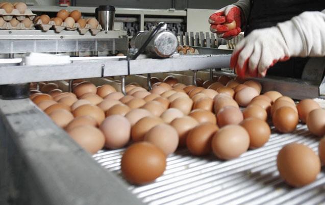 La consommation des œufs en progression au Maroc