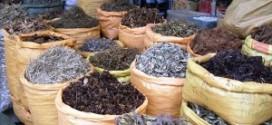 Maroc: Les plantes aromatiques et médicinales rapportent gros