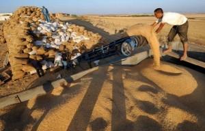 Agriculture: Le taux des droits d'importation du blé relevé à 75%