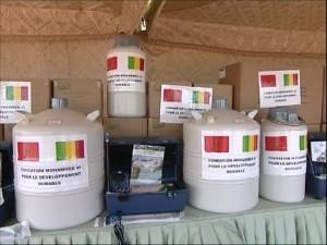 Elevage: Livraison au Mali d'un deuxième lot de semences bovines