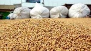 Maroc-cereales