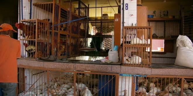 Maroc-volaille : Chute des prix et production en hausse en 2014