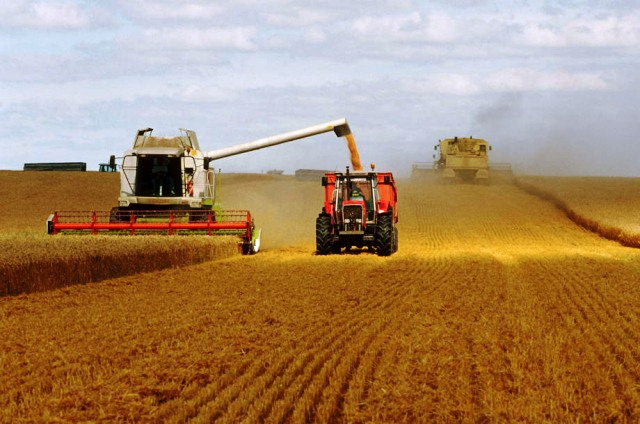 Céréales : Un nouveau record de la production mondiale de blé