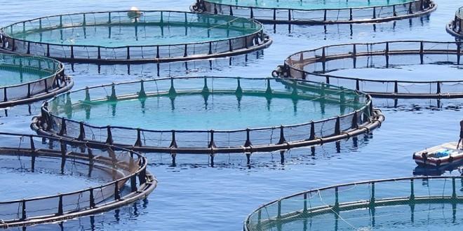 Dakhla-Oued Eddahab aura bientôt son complexe aquacole