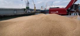 Maroc-Céréales: Les droits d'importations du blé tendre rabaissés à 30%