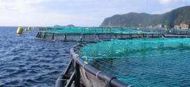 Aquaculture: L'ANDA annonce un nouveau plan d'action pour 2016