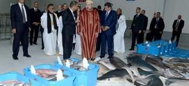 Maroc-Pêche: Une nouvelle halle au poisson ouvre ses pores à Dakhla