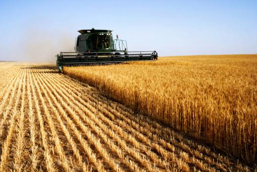 L'UE enregistre une production record de 331 millions de tonnes de céréales en 2014