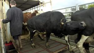 France-Vache folle