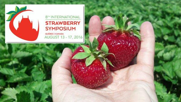 Le 8è Symposium international de la fraise en août au Québec