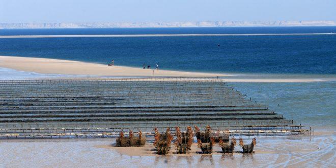 Maroc-Ostréiculture: Levée de l'interdiction sur le ramassage des huîtres à Dakhla