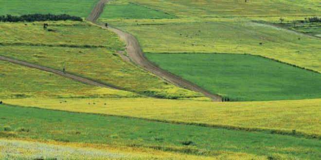 Maroc: Les agriculteurs s'attendent à une piètre récolte céréalière en 2016