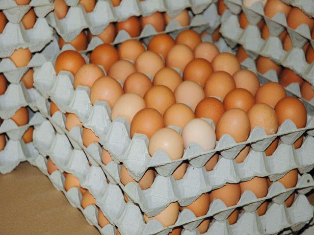 Maroc: Des œufs importés bientôt sur les plats du mois de Ramadan
