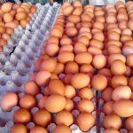 Le Maroc réduit de 40 à 10% les droits de douane pour l'importation des œufs