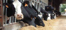 Elevage bovin: Début de distribution des aliments composés au prix subventionné