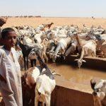 Maroc-LEGS-Elevage: Un atelier de formation pour la gestion des catastrophes naturelles