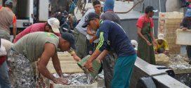 Pêche : Les débarquements en nette amélioration au premier semestre 2016
