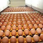 L'importation de 3 millions d'œufs d'Espagne n'a pas rabaissé les prix au Maroc