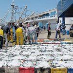 FAO: Le Maroc premier producteur/exportateur mondial de la sardine