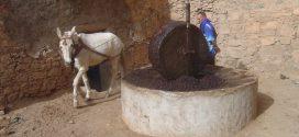 Maroc: Bientôt une campagne de lutte contre la vente informelle de l'huile d'olive