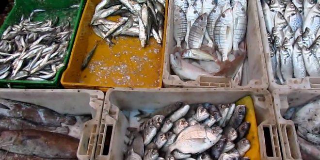 Maroc-Pêche: La flotte côtière et artisanale rapporte 4 milliards de DH à fin juillet