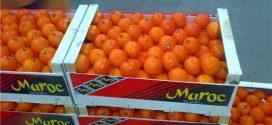 Levée de la suspension des exportations d'agrumes marocains vers les USA